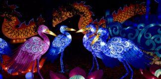 Chinesische Vögel